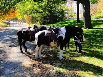 Central Park - Heste