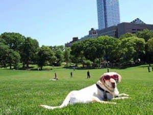 Parker i New York