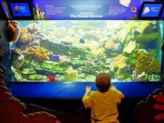 New York Aquarium - Fisk
