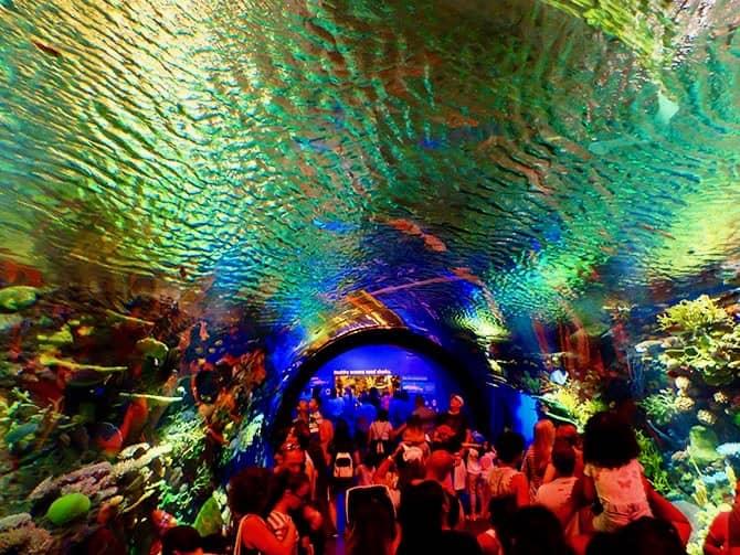 New York Aquarium - Koralrev