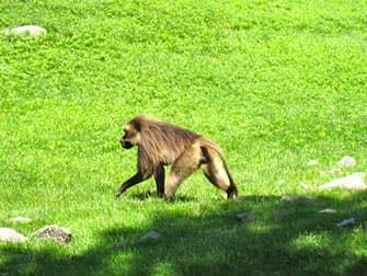 Bronx Zoo i New York - Abe